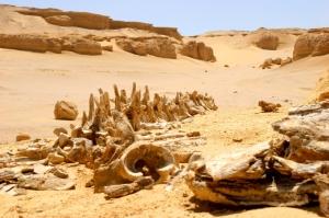 La valle delle Balene nello Wadi Rayan