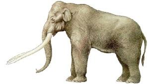 Una ricostruzione del massiccio elefante con le zanne dritte (Elephas antiquus)