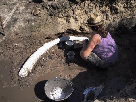 Il rinvenimento di resti di Elephas antiquus a Poggetti Vecchi