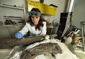 Una fase dei restauri conservati dei resti di Elephas antiquus