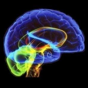 Il cervello è al centro degli studi sul linguaggio