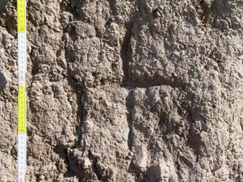 La croce nestoriana trovata incisa sulle mura di Bam: prova la presenza dei cristiani