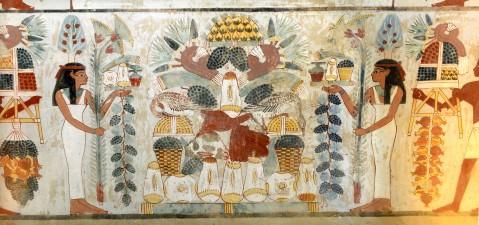 Tralci di vite nelle raffigurazioni della tomba di Nakht nella necropoli tebana di Sheikh Abd el Qurna