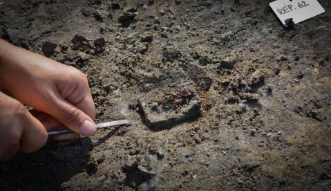 La terramara di Pilastri ha restituito frammenti di ambra che rimanda al mito padano di Fetonte, Eridano e le Eliadi