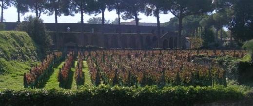 I vigneti di uve Aglianico, Piedirosso e Sciascinoso coltivati al Foro Boario di Pompei dal 1996