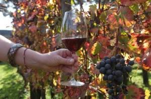 I vitigni di Pompei producono un Pompeiano IGT rosso