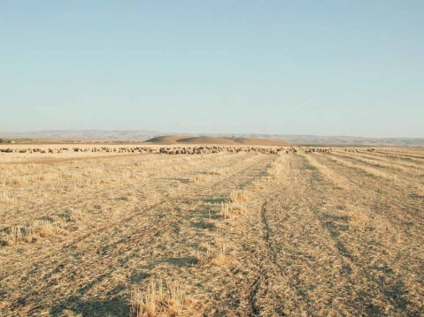 La collina artificiale di Mozan si eleva nel paesaggio siriano: là sotto è conservata Urkesh