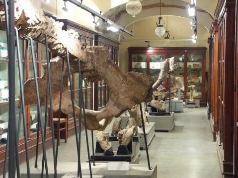 Una delle gallerie del museo Paleontologico di Montevarchi nell'allestimento ottocentesco