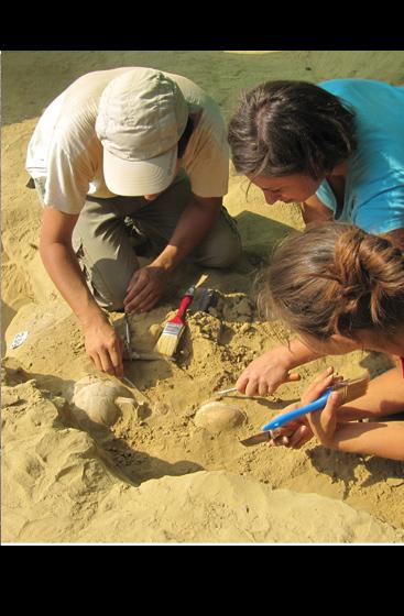 L'equipe coordinata da Elisabetta Borgna ha scoperto tombe micenee inviolate a Eghion el Peloponneso Occidentale