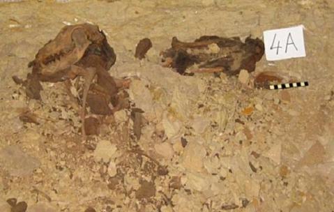 A Saqqara trovata una fossa comune con otto milioni di mummie di cani