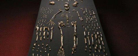 La ricostruzione di Homo Naledi con le centinaia di ossa fossili disponibili ai paleontologi