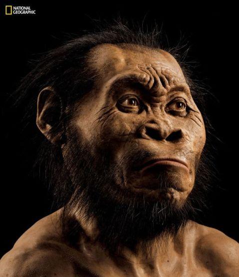 Una ricostruzione della testa di Homo Naledi realizzata dal paleoartista John Gurche, che ha lavorato sulla base delle scansioni delle ossa ritrovate, utilizzando pelliccia di orso per simulare i peli e i capelli. Fotografia di Mark Thiessen (National Geographic Society)