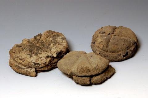 """Pagnotte """"carbonizzate"""" recuperate dagli scavi dell'area vesuviana, e in mostra all'Ara Pacis"""
