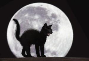 Il gatto nero, una delle superstizioni più diffuse