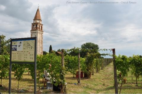 La vigna murata realizzata nella tenuta di Venissa sull'isola di Mazzorbo nella laguna di Venezia