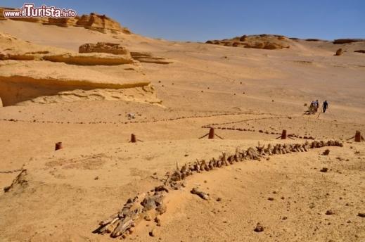 Wadi el Hitan, la Valle delle Balene, sito Unesco nel deserto occidentale del Medio Egitto