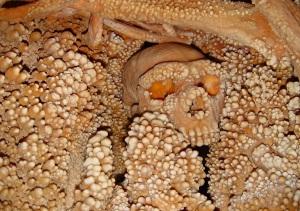 """L'uomo di Altamura ancora """"imprigionato"""" nella grotta di Lamalunga"""