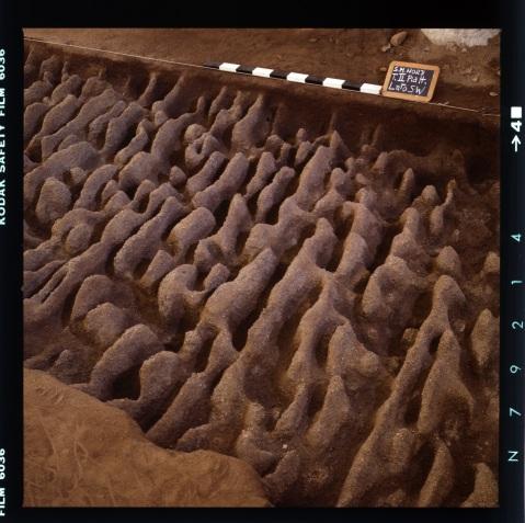 Tracce di aratura sacra risalente al 4mila a.C. nel parco archeologico di Saint Martin de Corleans di Aosta