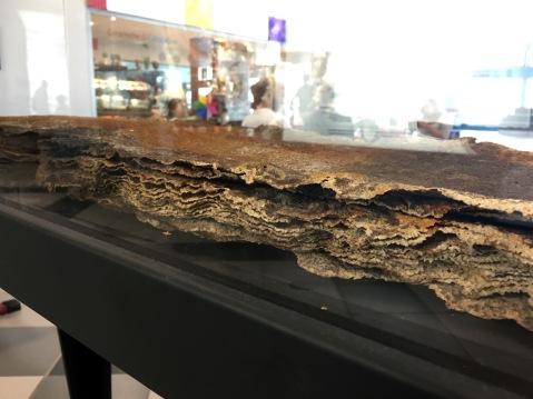 """Il singolare """"codice"""" esposto all'aeroporto di Palermo: un foglio di oltre 3 metri in pelle di razza"""
