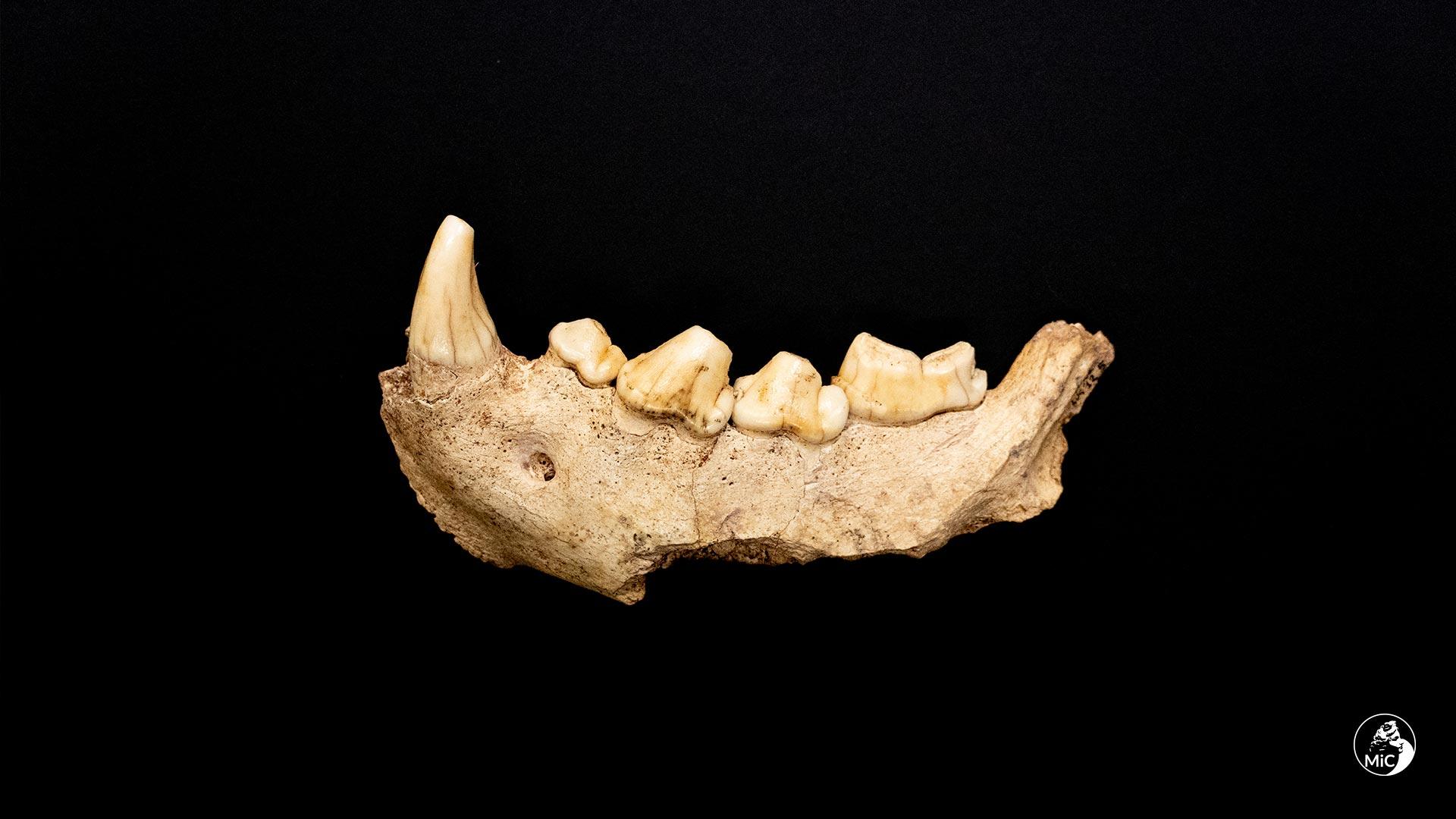 circeo_grotta-guattari_Neanderthal_mandibola-iena_foto-mic